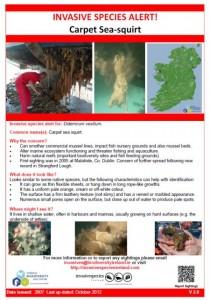 Invasive species alert carpet sea squirt