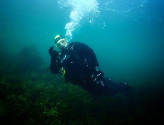 Virtual Dive Through a Rocky Reef in Strangford Lough